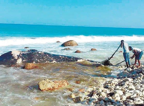 RD: Encuentran ballena muerta a orillas del mar